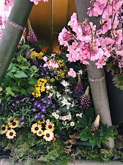 ツイン21桜装飾3